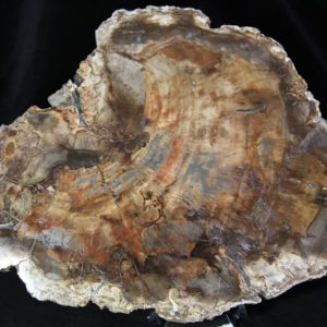 Petrified Wood -0