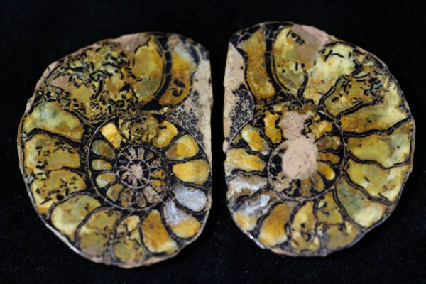 Hematite Ammonite Halves - Mini-0