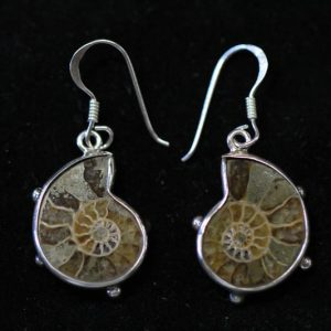 Ammonite Earrings in Silver-0