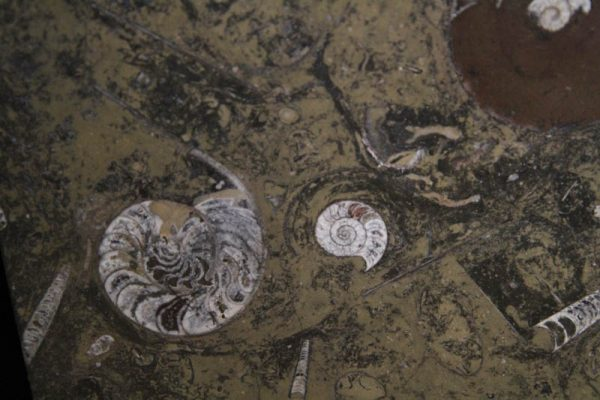 Fossil Marble Table-1978