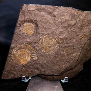 Pyrite Ammonite Plaque-0