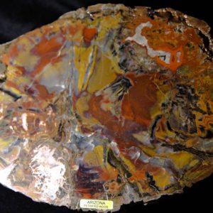 Arizona Petrified Wood -0