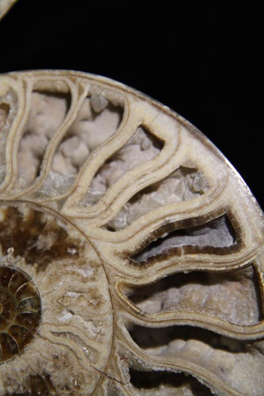 Ammonite Halves White-2346