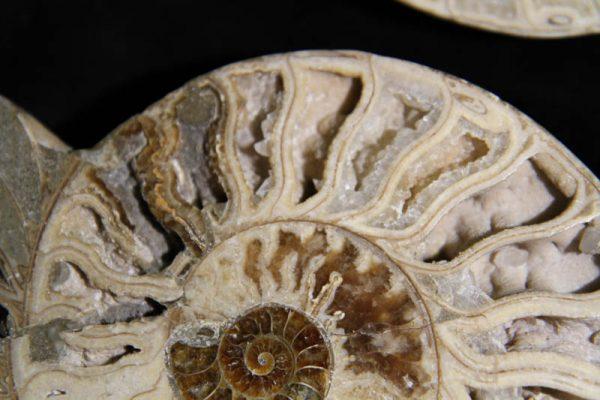 Ammonite Halves White-2343