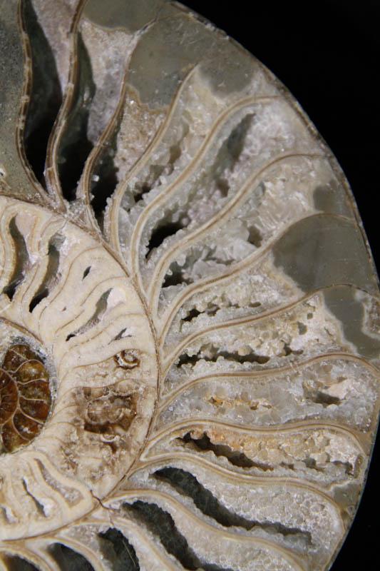 Ammonite Halves White-2348