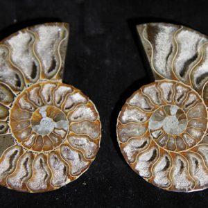 Ammonite Cleoniceras Halves-0