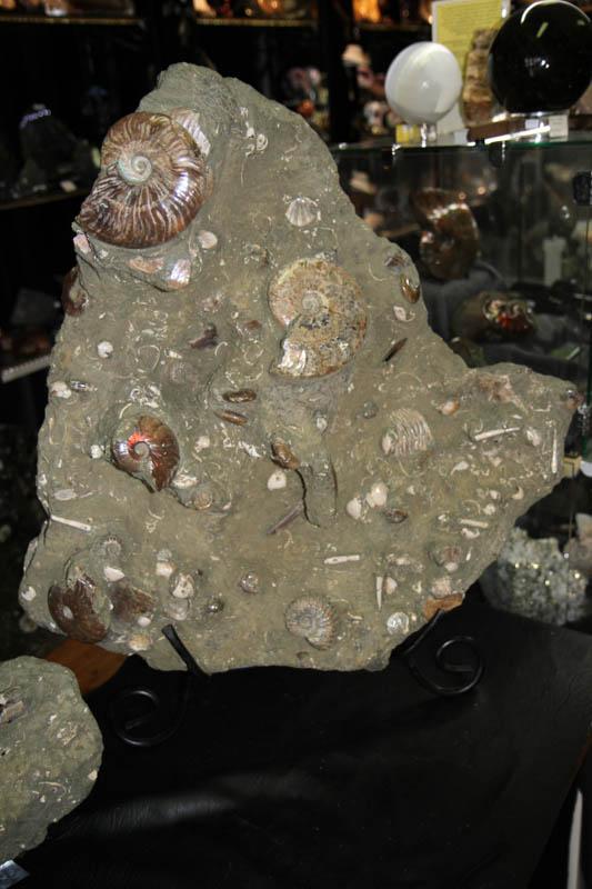 Massive Ammonite cluster-0
