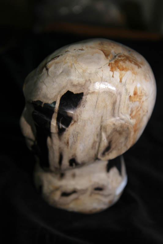 Petrified Wood Head-2591
