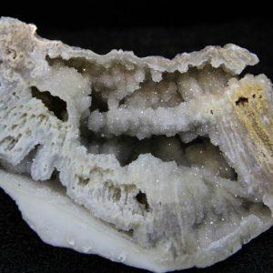 Agatised Coral-0